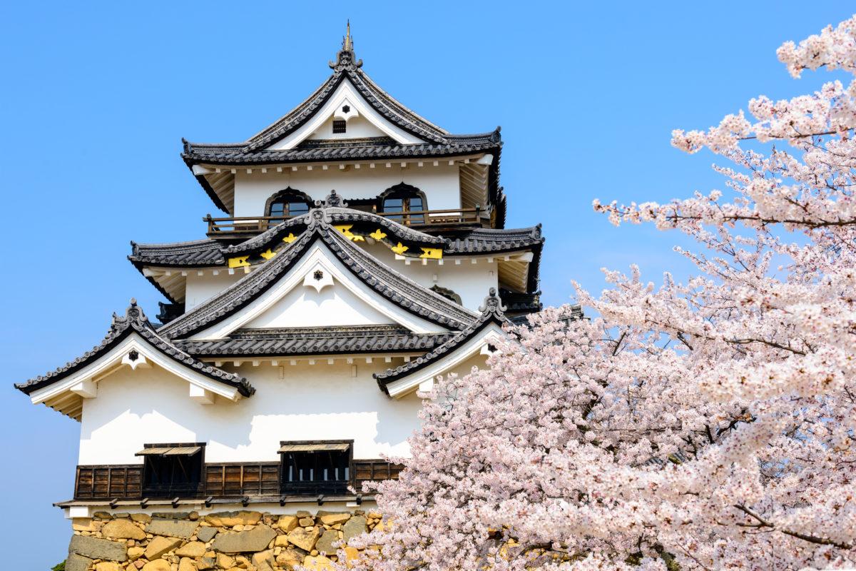 Pleine Lune du 21 Mars: vive Sakura!
