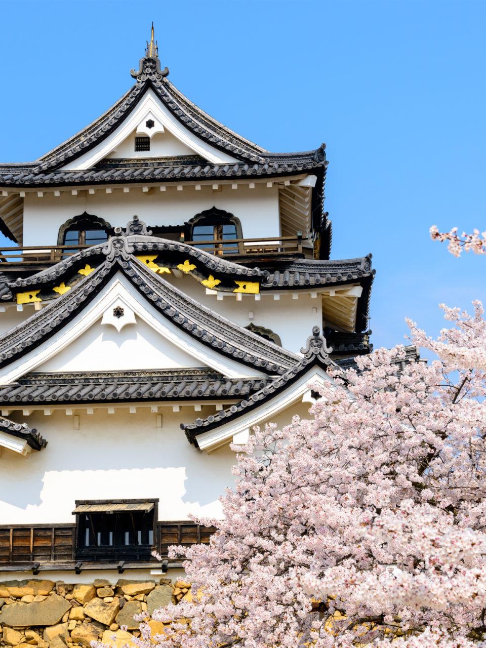 https://www.planetavenue.com/wp-content/uploads/2019/03/cerisier-japon1-960x1280.jpg