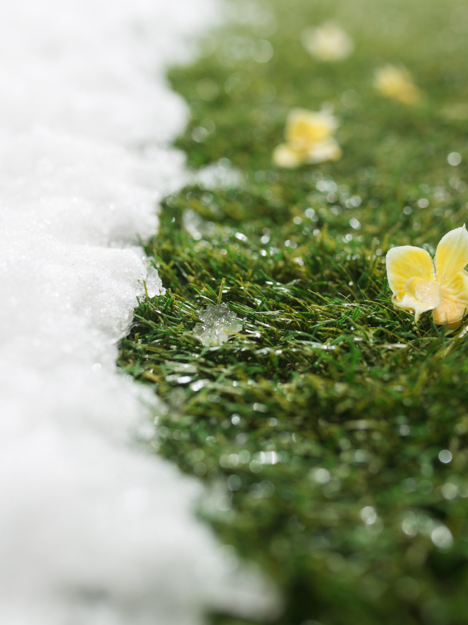 https://www.planetavenue.com/wp-content/uploads/2020/03/meeting-snow-on-green-grass-close-up-between-P9SQMDC-960x1280.jpg